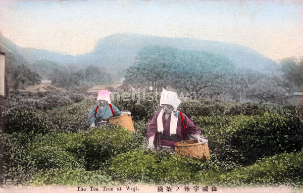 71129-0014 - Picking Tea