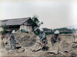 80129-0018 - Threshing Rice