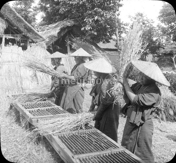 70330-0015 - Threshing Rice