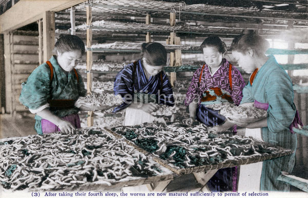 70425-0018 - Selecting Silkworms