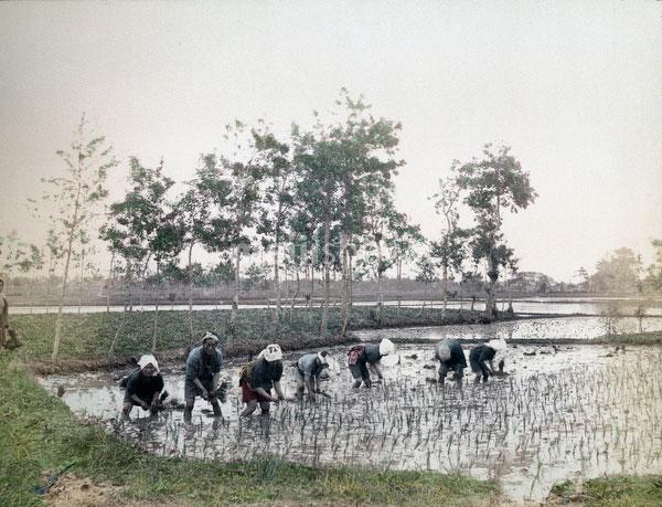 70601-0022 - Planting Rice