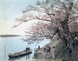 70602-0005 - Mukojima Ferry