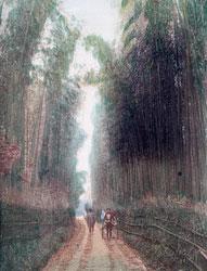 70603-0002 - Gojo Bamboo Grove