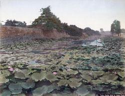 70604-0001 - Lotus Pond