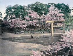 70604-0012 - Ueno Park