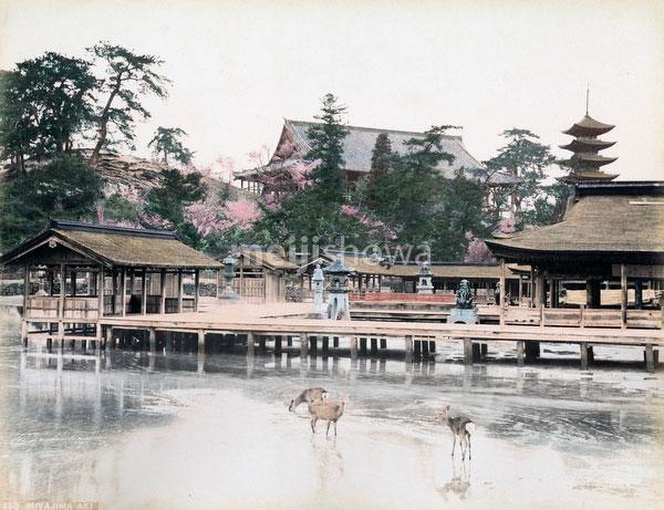 70606-0006 - Itsukushima Jinja