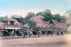 70614-0003 - Ueno Park