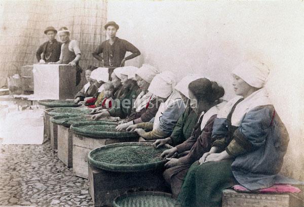 70614-0009 - Sorting Tea Leaves