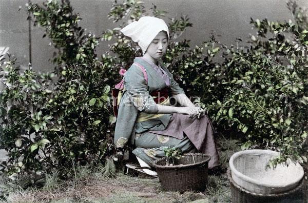 70614-0010 - Picking Tea