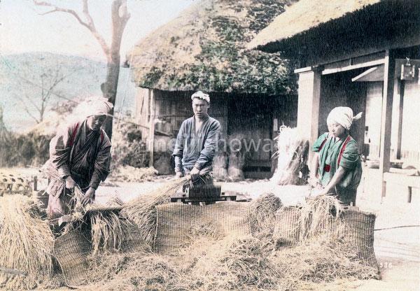 70618-0011 - Threshing Rice