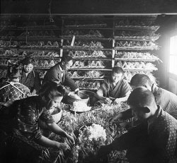 71009-0002 - Silk Farming