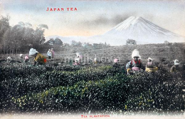 71203-0009 - Picking Tea