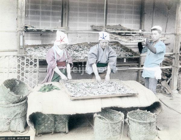 71205-0012 - Silk Farming