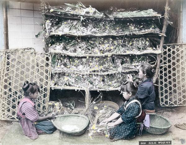 71205-0013 - Silk Farming