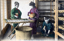 80107-0034 - Feeding Silkworms