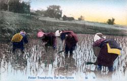 80107-0046 - Planting Rice