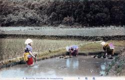 80107-0047 - Gathering Rice Seedlings