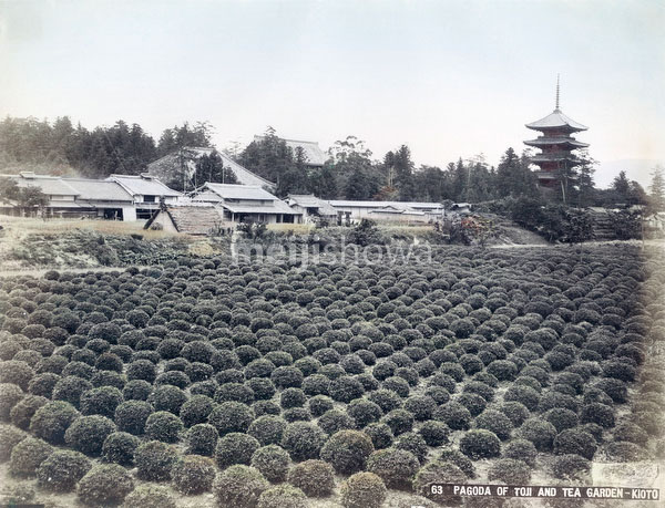 80115-0008 - Tea Field & Toji Pagoda