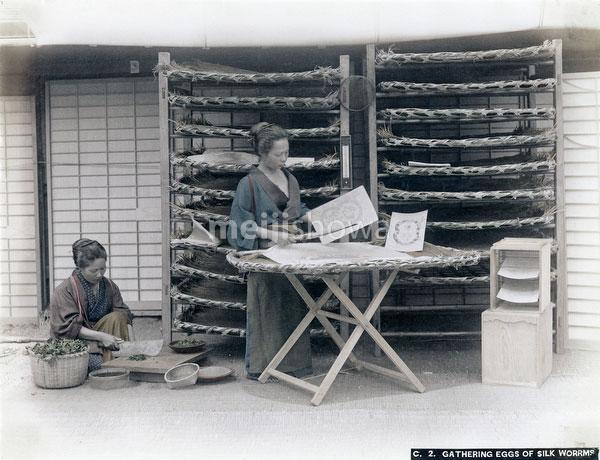 80115-0016 - Removing Silkworm Eggs