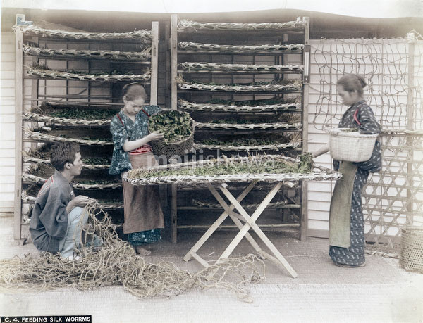 80115-0018 - Feeding Silkworms