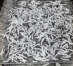 80121-0014 - Silkworms