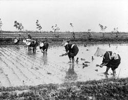 80122-0001 - Planting Rice