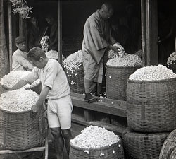 80122-0002 - Examining Cocoons