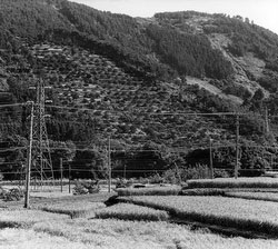 80122-0005 - Agriculture