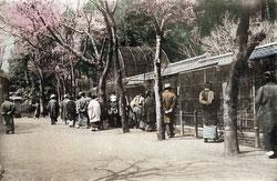 80123-0004 - Ueno Zoo
