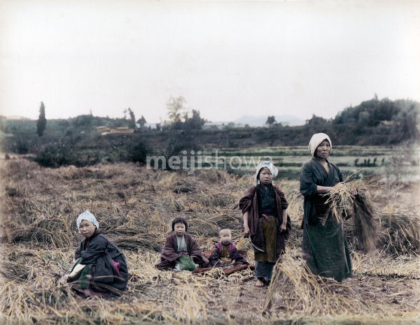 80129-0016 - Harvesting Rice