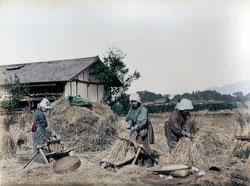 80129-0018 - Threshing Rice