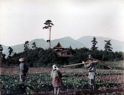 80129-0034 - Farming