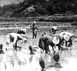 80221-0024 - Planting Rice