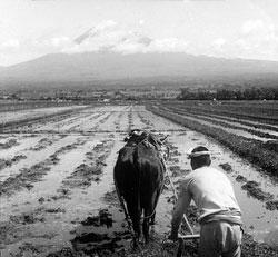 80717-0018 - Plowing