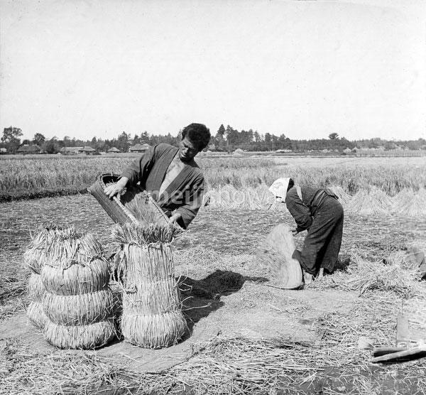 80717-0019 - Packing Rice
