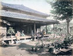 80901-0025 - Bonsai