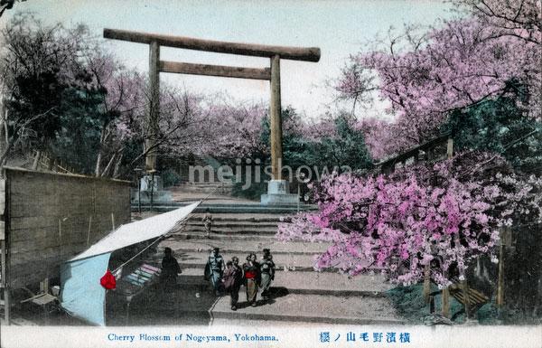 70510-0009 - Nogeyama