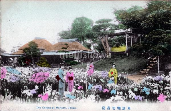 90510-0008 - Iris Flowers at Horikiri