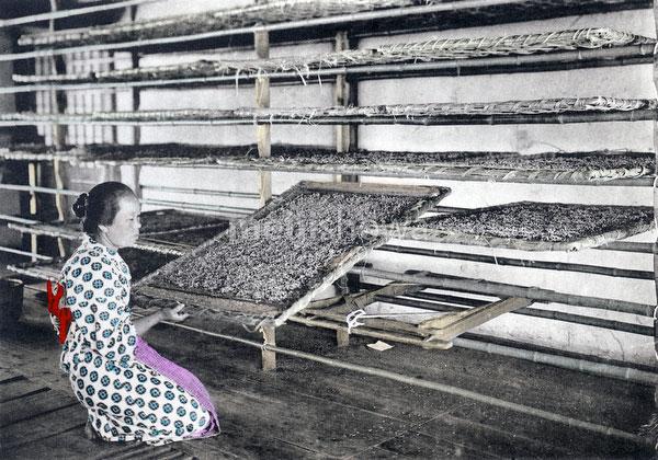 100914-0006 - Checking Silkworm Beds