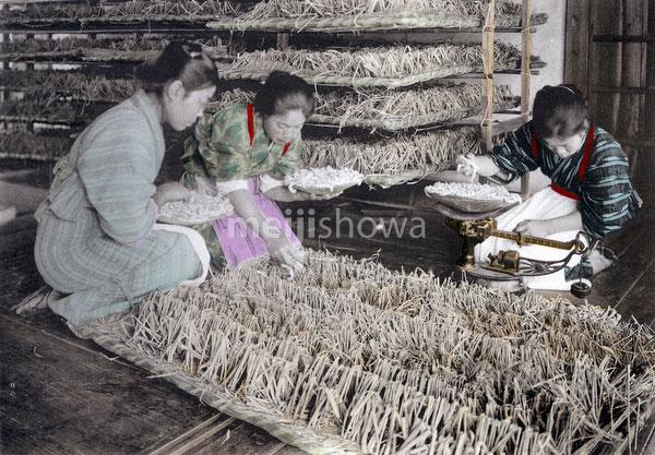 100914-0011 - Spreading Silkworms