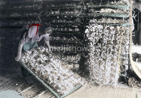 100914-0012 - Inspecting Silkworms