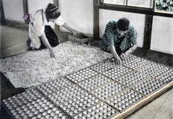 100914-0015 - Depositing Silkworms Eggs