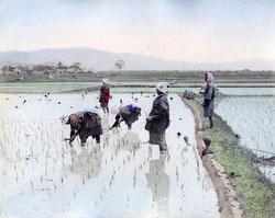80302-0079-PP - Planting Rice
