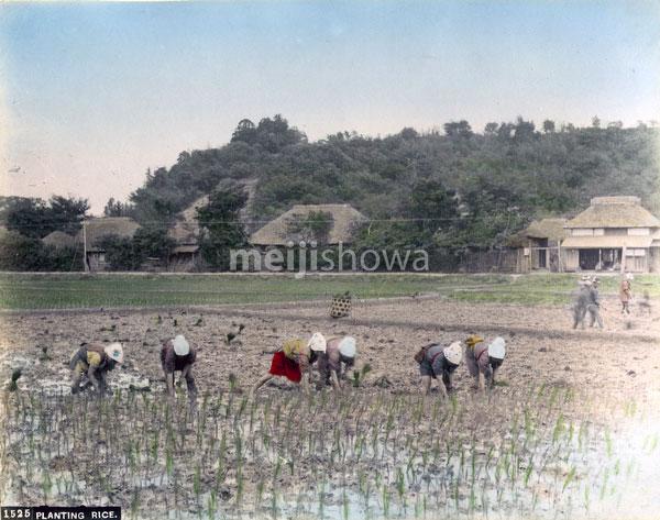 80302-0080-PP - Planting Rice