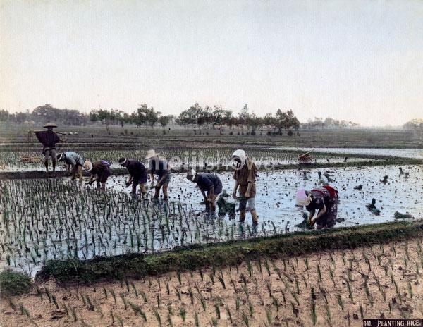 80302-0124-PP - Planting Rice