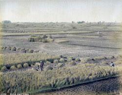 101105-0017 - Harvesting Rice