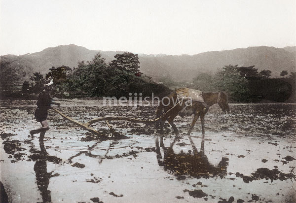 110609-0001 - Plowing a Rice Field