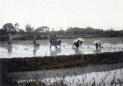 110609-0003 - Planting Rice