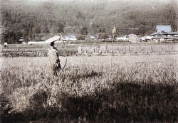 110609-0005 - Scarecrow in Rice Field