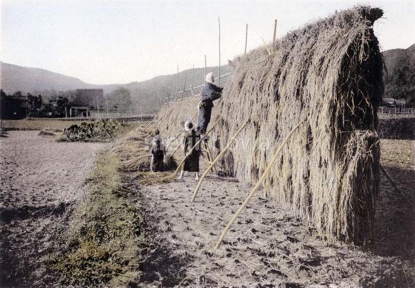 110609-0007 - Drying Rice